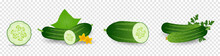 Cucumber Plant. Set Of Cucumber Seed, Sprout, Flower, Leaves, Vegetable. Plant Growth. Vector Elements Isolated On Transparent Background