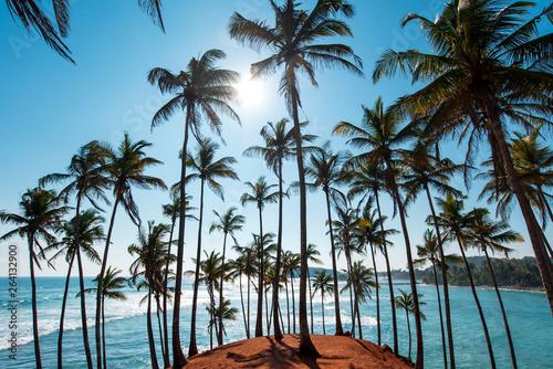 Fotografie, Obraz Coconut tree hill in Mirissa Sri Lanka