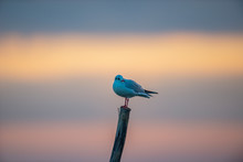 A Seagull Sitting On Top Of A Piece Of Wood