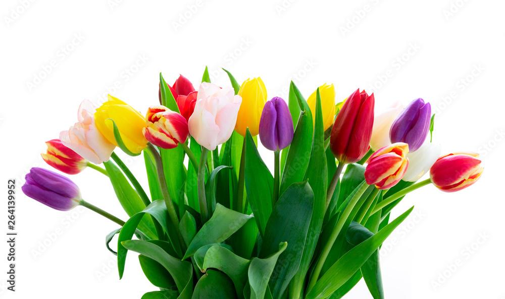 Fototapety, obrazy: fresh tulips flowers