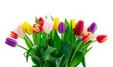 Fototapeta Tulips - fresh tulips flowers