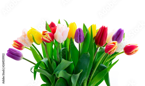 Cadres-photo bureau Tulip fresh tulips flowers