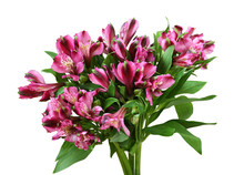 Bouquet Of Pink Alstroemeria F...