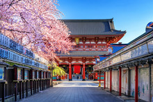 Cherry Blossoms And Temple In ...