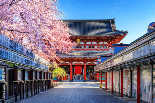 Photo Cherry blossoms and Temple in Asakusa Tokyo, Japan.