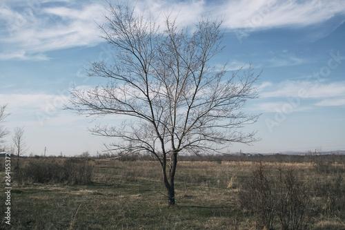 Fotografie, Obraz  Elm tree. Tree background. Nature background.