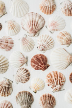 Sea Shells Pattern On White Background. Flat Lay, Top View Texture.