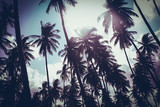 Coconut palm trees in sunset light. Vintage background. Retro toned poster. - 264167340