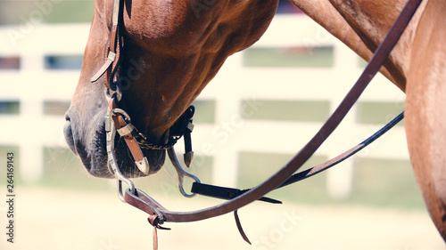 Photo  Western horse head with halter