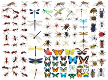 Vector, Isolated, Set Of Insects, Butterflies, Beetles, Ants, Mosquitoes