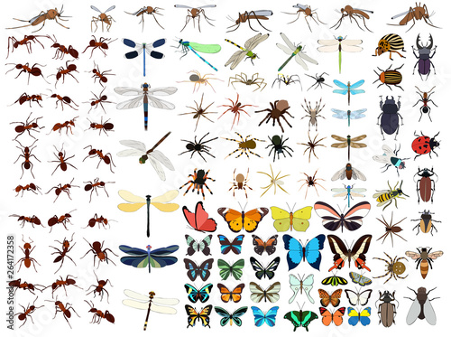 Fototapeta vector, isolated, set of insects, butterflies, beetles, ants, mosquitoes