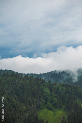 Morning foggy landscape of peaks of green mountains covered with old forests and cloudy sky. Vertical color photography.