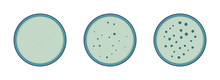 Microbiology. Colony Bacteria Growth In Petry Dish, 3 Stages, Vector Flat Style.