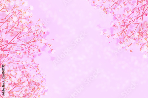 Natural floral background of bright daisy flowers