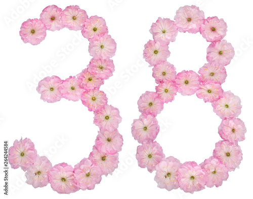 Fotografia  Numeral 38, thirty eight, from natural pink flowers of almond tree, isolated on