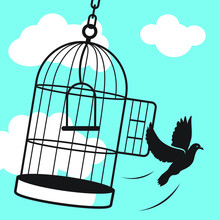 Free Bird From Cage