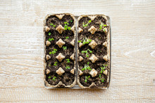 Small Plats Growing In Carton ...