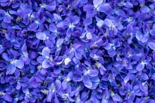 Flower Background - Macro Imag...