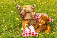 Teddy Bear's Picnic In Summer ...