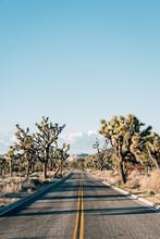 Road In The Desert, In Joshua ...