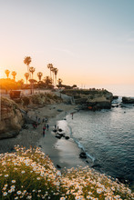 Flowers And View Of A Beach At Sunset, In La Jolla, San Diego, California