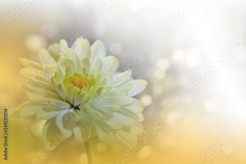 Beautiful Nature Background Close Up Photography Abstract