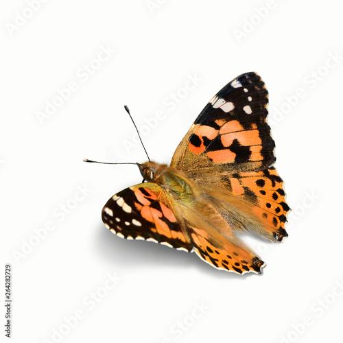 Schmetterling 556