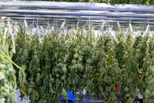 Cannabis Drying Rack