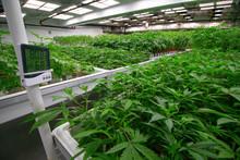 Indoor Cannabis Facility Tempe...