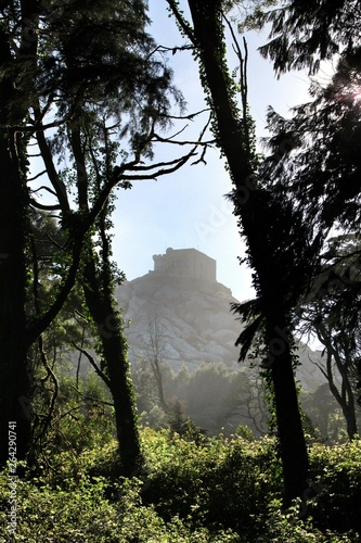 Photo Capuchin convent betwenn Leafy forest with colossal trees