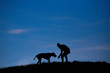 silhouette of man and dog on blue sky