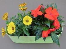 Small Scale Hobby Gardening: B...