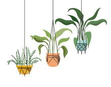 Houseplants On Macrame Hangers Icon