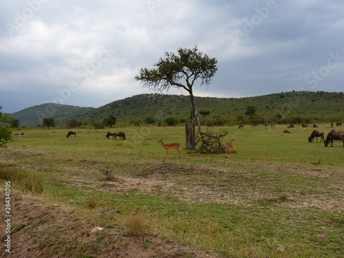 Poster Afrique Maasai Mara, Kenia, safari