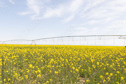 Fotografía  Canola field and water fountains