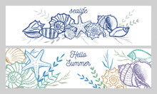 Seashells And Seaweed In Color...