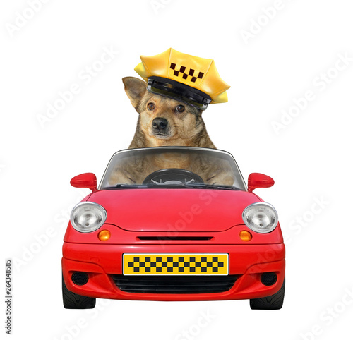 Fotografering The dog taxi driver in a cap is in a red car
