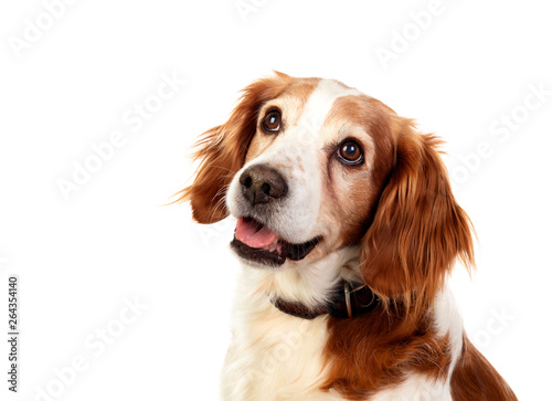 Keuken foto achterwand Hond Beautiful portraits of a dog