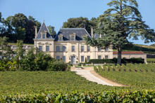 Vineyard Of Chateau Fonplegade...