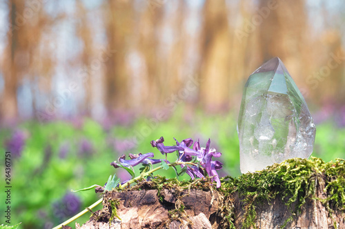 Perfect large shining crystal of transparent quartz in sunlight on spring nature Canvas Print