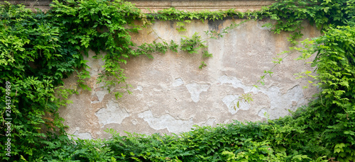 Fotografia Green leaves on a wall for background with free space