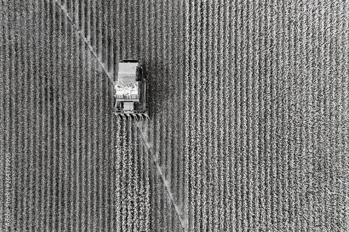 Fotografia D Cotton harvest top down BW