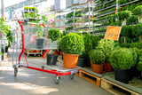 shopping cart with plants at ornamental garden plants store - 264385772