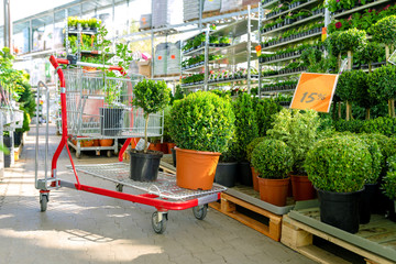 shopping cart with plants at ornamental garden plants store