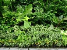 Green Plant Of Bush