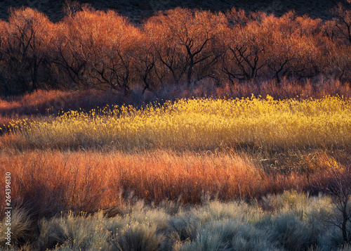 Colorful Trees and Brush near Bishop, CA Canvas Print