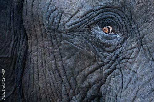 elephant eye Wallpaper Mural