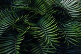 Green betel palm leaf pattern, natural texture background concept - 264401944