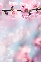 The Lush Blooming Of Pink Flow...