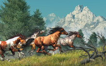 Four Wild Mustangs Gallop By Fir Trees And Up A Grassy Hillside In The Rocky Mountains, One Is Brown, But The Others Are All Paint Horses. Their Manes Blow In The Wind As They Race. 3D Rendering